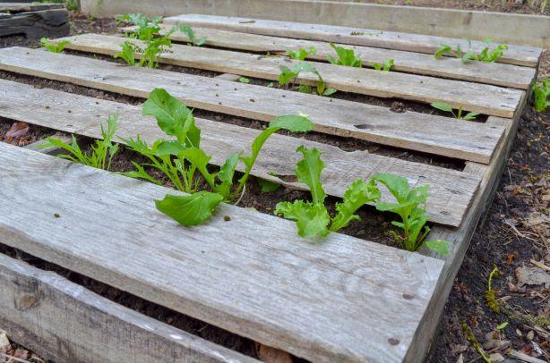 Garden DIY ideas